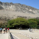 Students walk toward the woods that takes us to the Caral site.