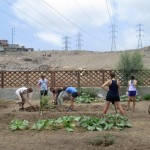 Students at work in the community garden.