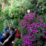 The garden at Las Portadas is full of beautiful flowers cultivated by Leopoldo.
