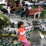 A little girl plays among the pigeons in Arequipa's main plaza.