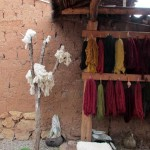 Recently washed wool hung to dry.