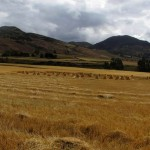 We see lots of signs that it is harvest time as we drive through the valley.