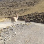 Switchbacks and llamas en route to Vito.
