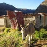 One of the burros who greeted us in the morning outside our door.