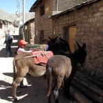Walking through the village, Leydy stops to visit with several burros.