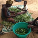 Preparing Baobab leaves
