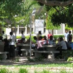 University students studying under the shade trees