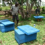 Pastor Simion with the new beehives which David helped to build