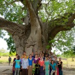 baobab tree, likely more than 300 years old