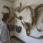 Fossils of extinct megafauna from Olduvai dating to about a million years ago.