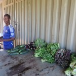 The produce brought from the farms to the COOP for sale to Grumeti.