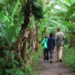 Walking to school through banana groves.